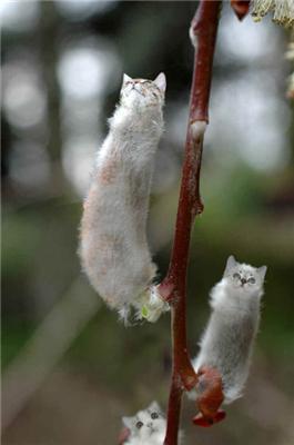 Весна .... котики цвітуть!