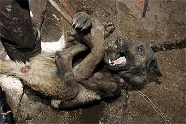 Не для слабонервных! Как в Китае жарят собак