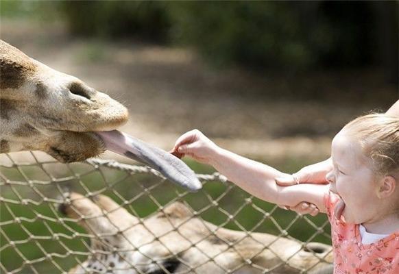 Позитив дня в ФОТО. Бобри, дівчата, даішники та інші тварини