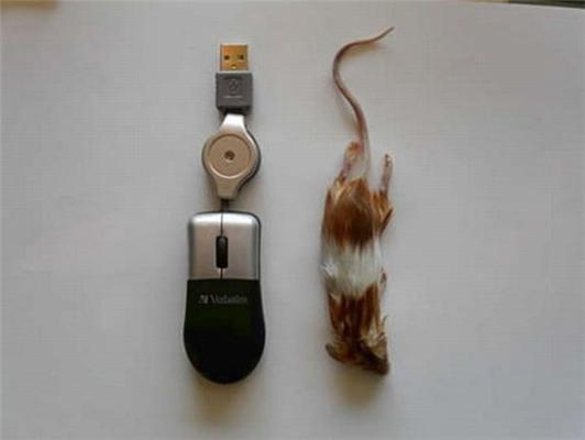 Ідіотизм дня - СПРАВЖНЯ комп'ютерна мишка. ФОТО