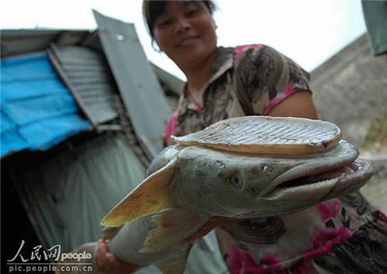 Екзотика дня. Риба з підошвою