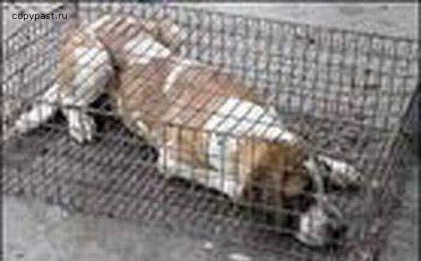 Копчені собачки. Що подають до нелегальних ресторанах. ФОТО