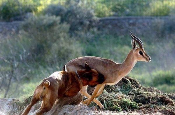 Навіть мисливець може потрапити у вельми пікантну положеніе.ФОТО