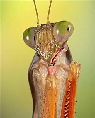 Підбірка гламурних комах. Знайдіть свою подругу. ФОТО