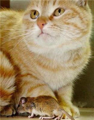 Кішки-мишки. Приймаються ставки - зжере чи ні? ФОТО