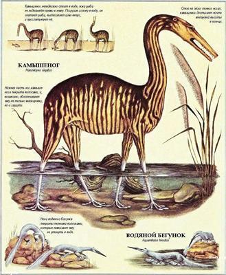 Після людини: Зоологія майбутнього. ФОТО