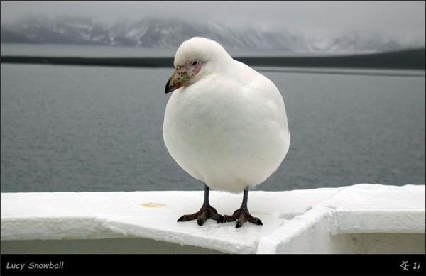 """""""Пам'ятаю, пам'ятаю, як мив твою ж% ПКУ в Гренландії ..."""" ФОТО"""