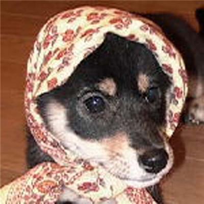Це знущання над тваринами? Тузики-бабусі. ФОТО
