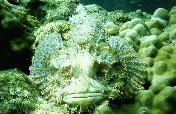 Что скрывает поверхность моря? Тайны глубин. ФОТО