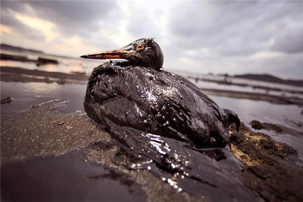 Это писец и нефтяные бакланы. Нам в этом жить. ФОТО