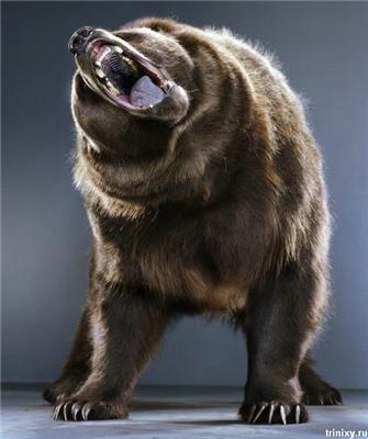 Так от про Медведєва ... Його дружина і ведмедів! ФОТО