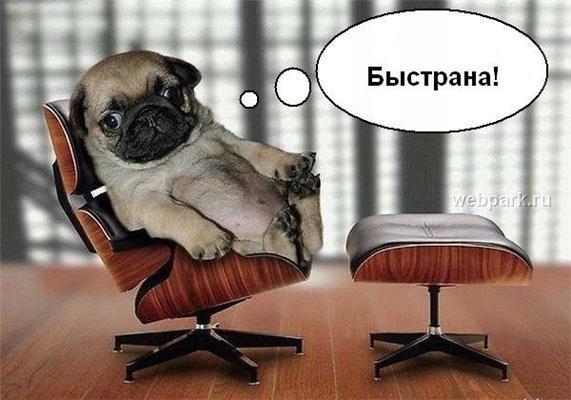 """Всем офисным работникам: """"Быстро-на готовиться к НГ!"""". ФОТО"""