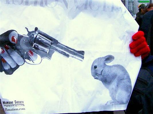 Посмотри в глаза своей шубе. Акция защитников животных. ФОТО