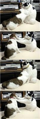Страшна бійка двох котів. Просто м'ясо, кігті і шерсть. ФОТО