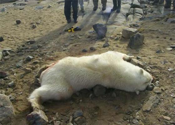 Жесть. Последствия нападения Медведа на человека. ФОТО