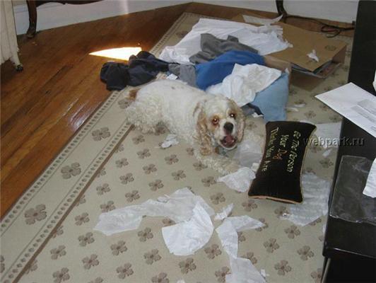 Тварини ДУЖЕ не люблять залишатися самі вдома. І мстять! ФОТО