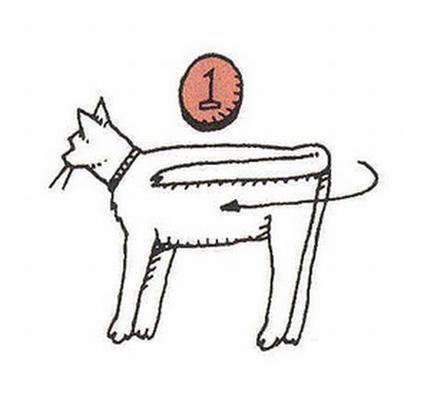 Інструкція. Як скласти кота. ФОТО