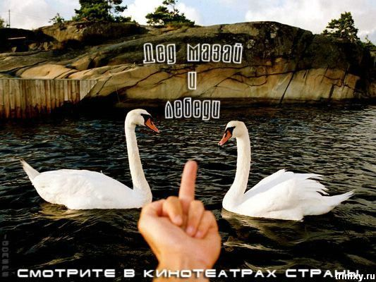 Позитив дня. Дыхание Путина, девушка с горшком и киски. ФОТО