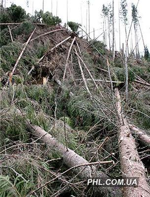 В Прикарпатье сама природа уничтожает леса. ФОТО