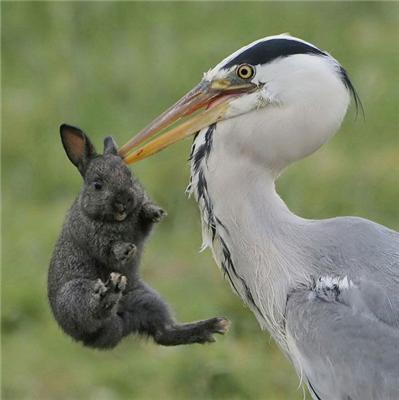 Помив. І з'їв. ФОТО строго не для любителів кроликів!
