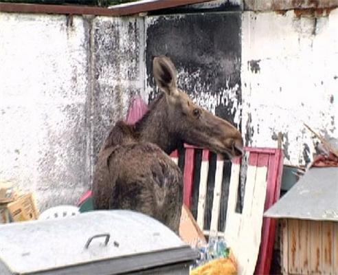 Дикие животные приходят за едой на киевские рынки. ФОТО