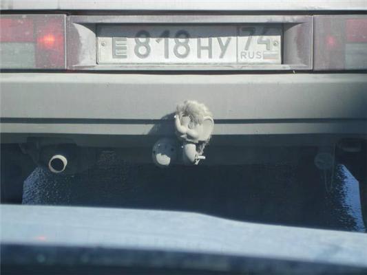 Жесть: слону оторвали голову и прикрутили к машине. ФОТО