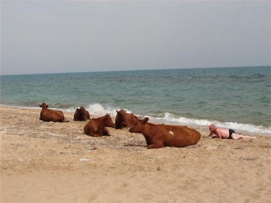 Мужик загоряє з тьолками на пляжі. Спекотне ФОТО