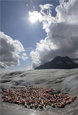 600 людей роздяглися в Альпах. Фоторепортаж