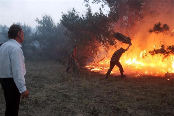 Лесные пожары смешные картинки, грамоты