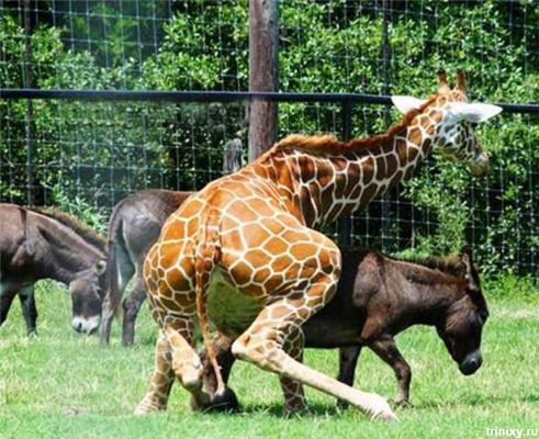 Позитив дня. Секс з жирафом і гаманці Кобзона