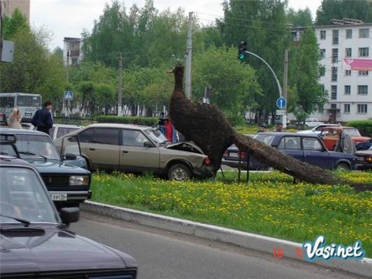 Что будет, если эта птичка столкнется с машиной?