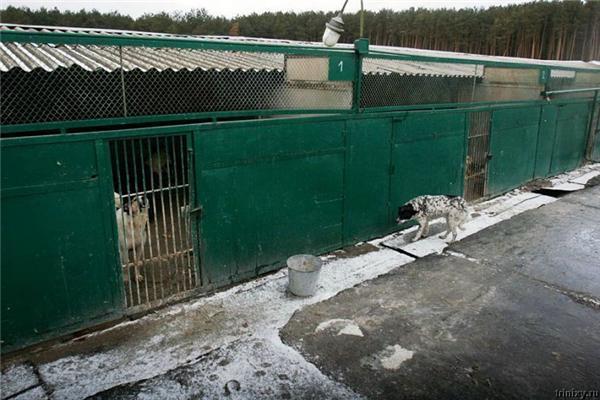 Право вбивати. Притулок для собак у селі Бородянка