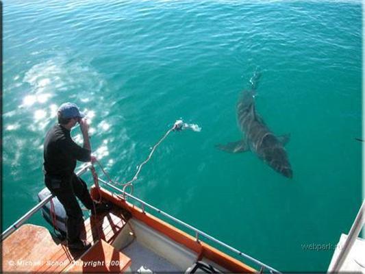 """Любов до акулам. Рибка з """"Щелеп"""""""