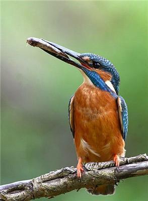 Красивый рыболов Kingsfighter. Порыбачить бы с таким...
