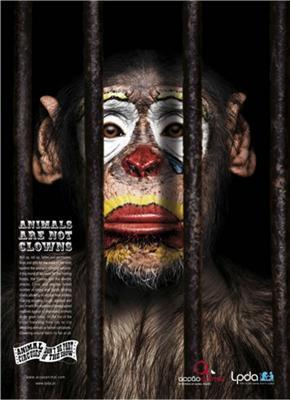 Сам ти мавпа! Тварини не клоуни. Акція проти цирку