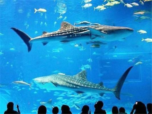 Гигантский аквариум в Окинаве. Динозавры в воде!