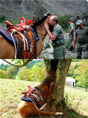 От поцелуя Путина любая кобыла сойдет с ума...