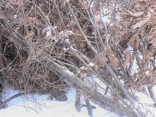 Голая девушка бомжует в лесу из-за кризиса