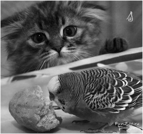 Диета для животных