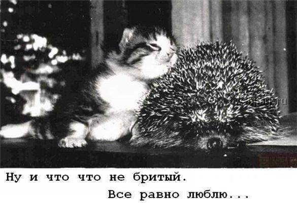 Перевод с языка животных. Расшифровка для любознательных