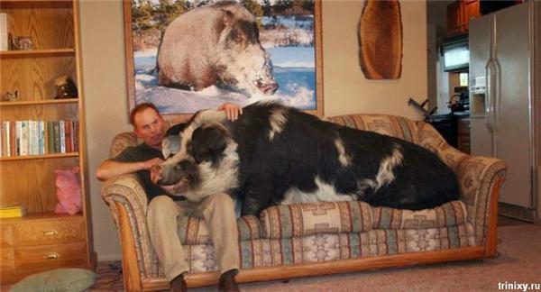 Позитив дня. Клоун Путін і дівчина у ванній зі свинею