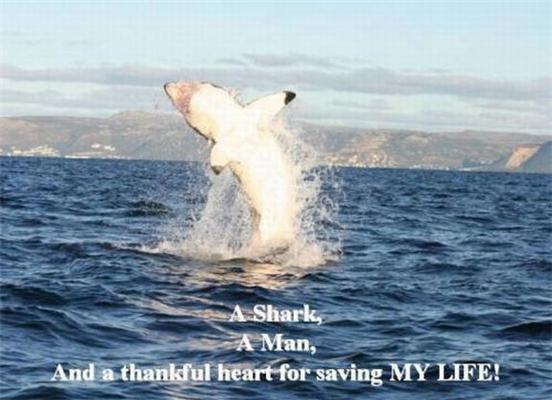 Акуляча любов - дивна штука