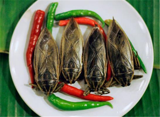 Лакомства Таиланда. Жучки, тараканы и другие насекомые