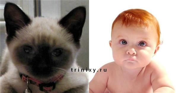 Коты, как дети. Ласковые киски и грозные кошаки