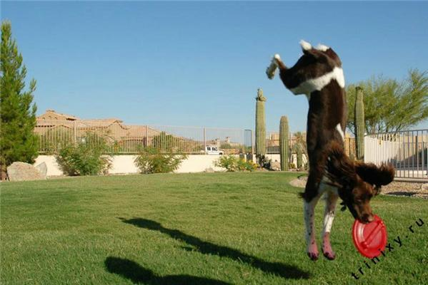 Коровы не летают - это факт. Зато есть летающие кошки
