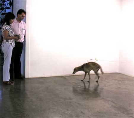 Художество: Заморити тварина голодом онлайн. Підпишіться!