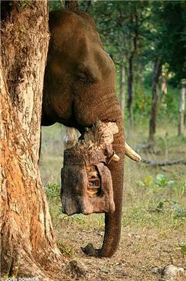 Вперше. Фотографії, зроблені слоном-папарацці
