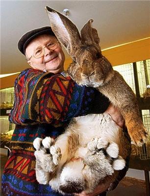Емо кролик опанував власницею. 22кг ??живої ваги ...