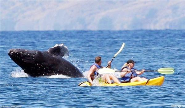 Гребибля. Нападение кита на людей во время отдыха на Гавайях