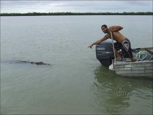 Почему нельзя тыкать пальцами в крокодилов